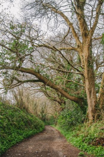Totnes country walk with gnarly trees
