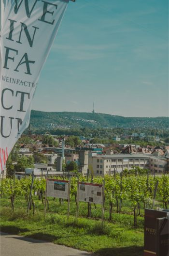 vinyards and winery in the middle of Stuttgart with a view over residential areas in the distance