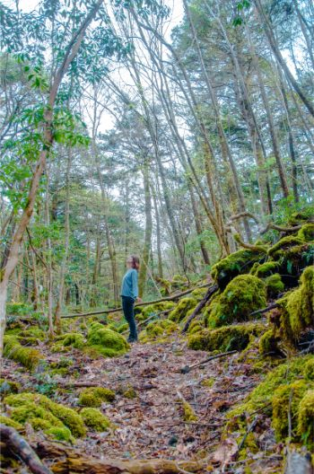 woman standing in Aokigahara Forest with moss covered trees near Kawaguchiko, Japan