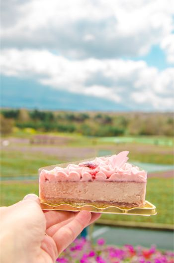 sakura cake at Shibazakura Festival, Japan
