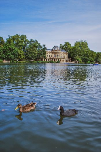 Schloss Monrepos seen from a lake with ducks swimming