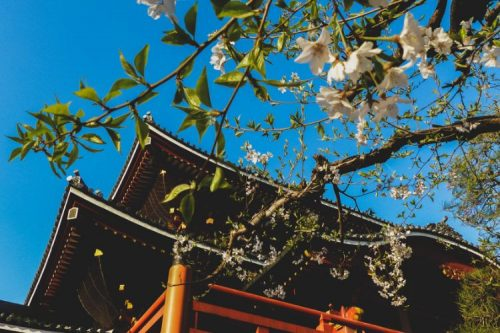 Osu Kannon Temple surrounded by cherry blossoms