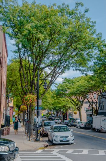 streets of Tarrytown, NY in autumn