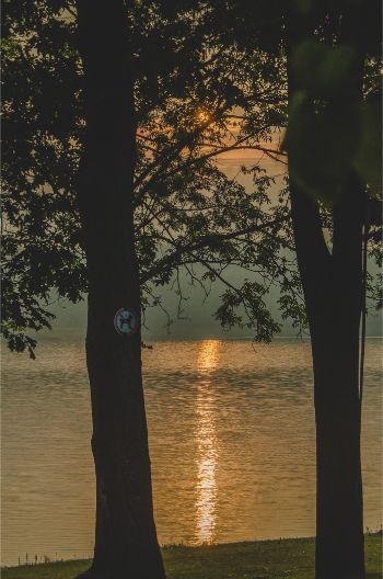 sunrise captured through the trees over Lake Pöhl in Germany