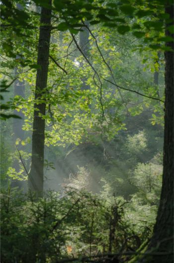 light piercing through the forest foliage in Saxony, Germany