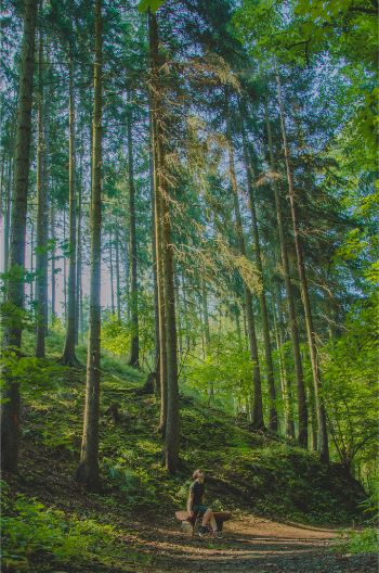 high trees in a forest in Saxony, Germany