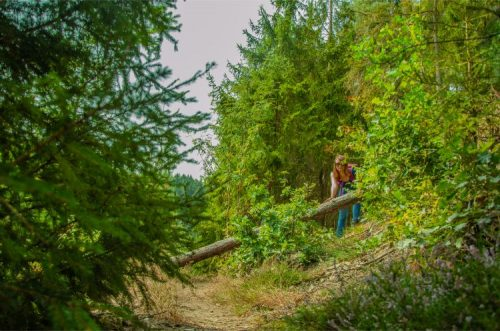 climbing over a fallen tree along the Vogtland trail in Germany