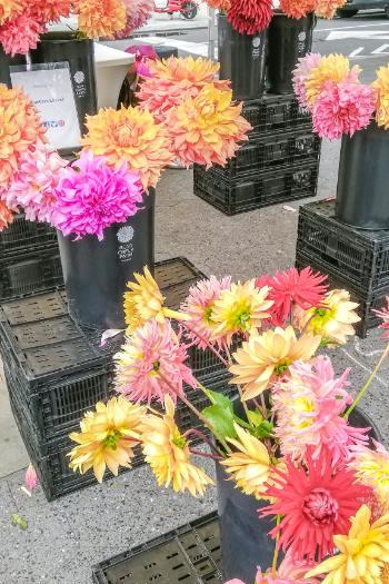 Bryant Park Farmers Market fresh flowers