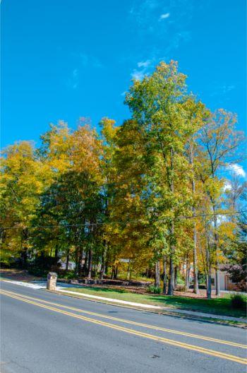Greensboro street in autumn
