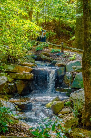 The Bog Garden waterfall in Greensboro NC