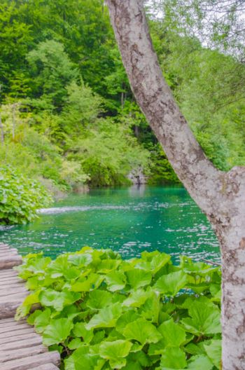 close up of lake at Plitvice National Park, Croatia