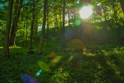leafy path near the Rennsteig