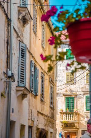 pretty flowers in Old Town Split, Croatia