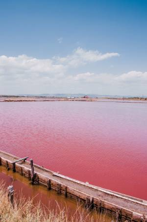 vibrant pink lake in Burgas, Bulgaria