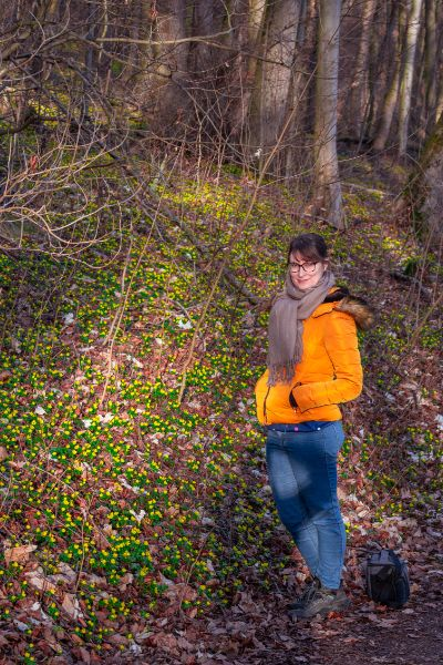 woman looking over winter aconites in forest