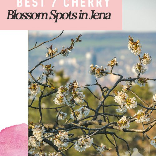 Pin: 7 Iconic spots to see cherry blossoms in Jena, Germany