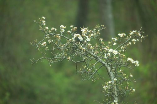branch of white blooming flowers