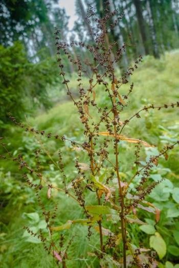 grasses and plants in the Central German moors