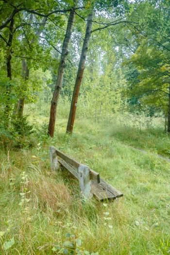 bench at forest edge in Bad klosterlausnitz