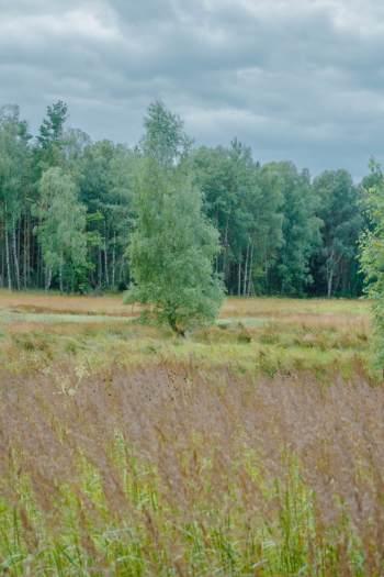 grasslands with forest edge in Bad Klosterlausnitz